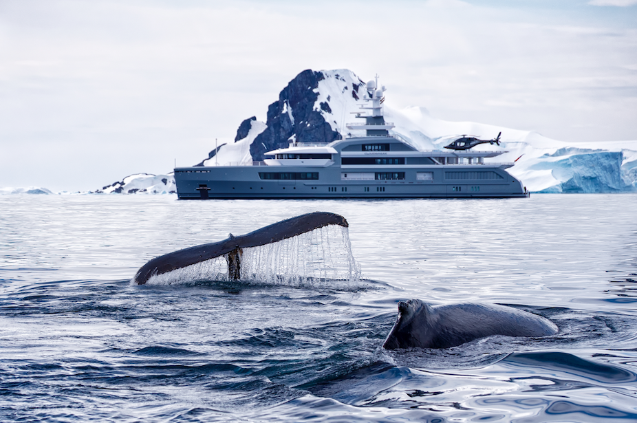 Whales in Antartica