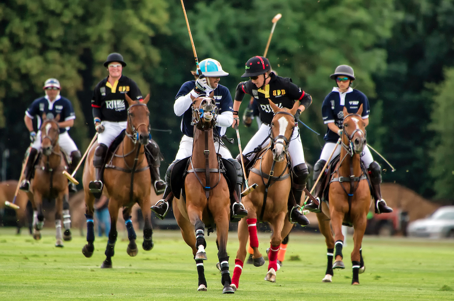 Photo of Polo Players and Polo Horses