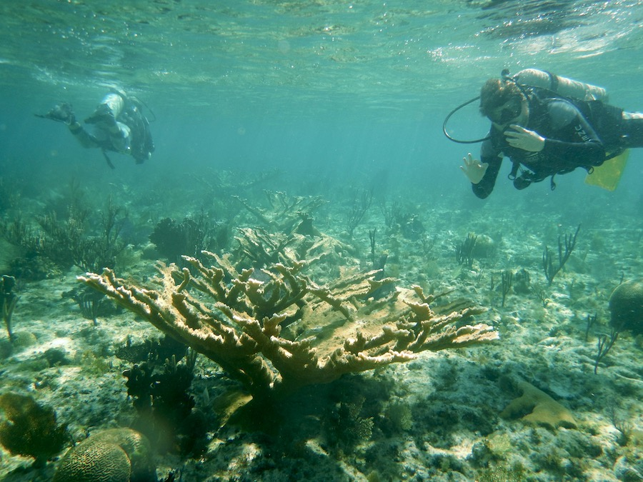 Divers on a coral reef