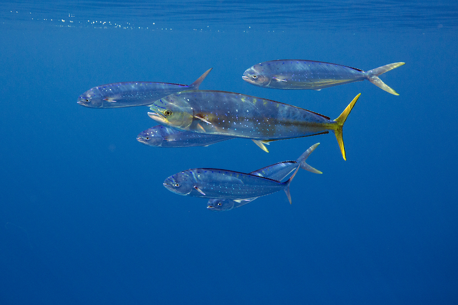 Save The Med Fish