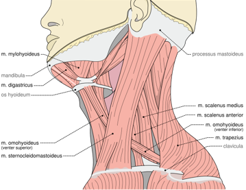 Torticollis, Wry Neck, Crick in the Neck